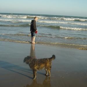 Boscoe at the beach