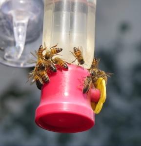 no humming birds, just bees