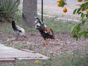 feeder visitors