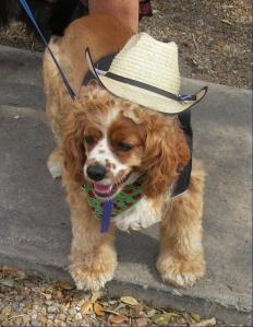 Cowboy Charlie