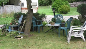 Seating area under a large maple tree