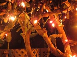 Cactus Christmas lights