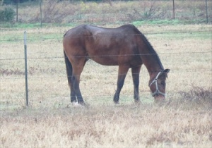 If you're in Texas there has to be horses. Woke up to find this guy feeding on the other side of the fence.