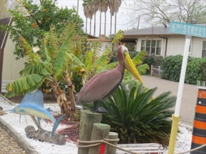 A pelican in the front yard. Those are oranges in the background.