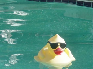 The only one willing to brave the cool temperatures, but the pool is there ready for warmer temperatures to arrive.