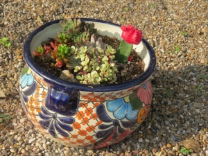 Flower pot with small cacti.