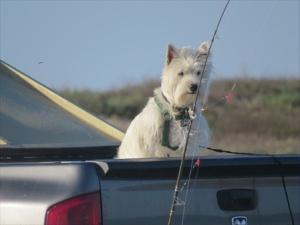 A fishing dog