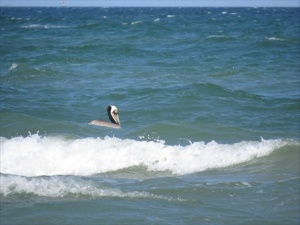 In the surf.