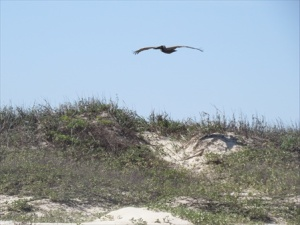 Flying over the dunes.