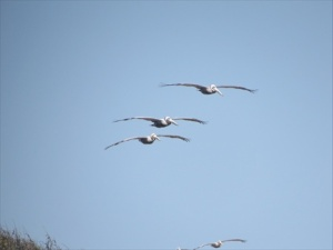 Three in formation.