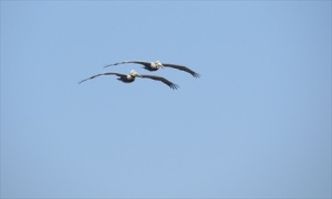 Two soaring.