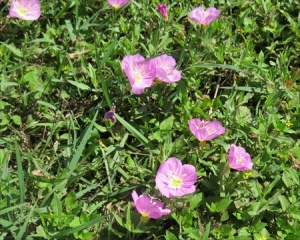 and pink flowers