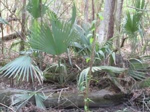 Tropical foliage, Fountainbleu